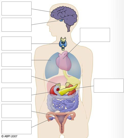 Quiz hormones abpi resources for schools diagram showing endocrine glands ccuart Choice Image